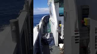 Campionando in mare