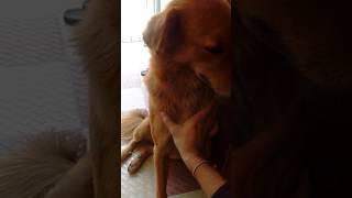 Stray Dog Asks For Massage & Love