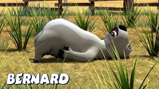 Download Bernard Bear | 🌾🌱Cutting the Grass AND MORE🌱🌾 | Cartoons for Children | Full Episodes