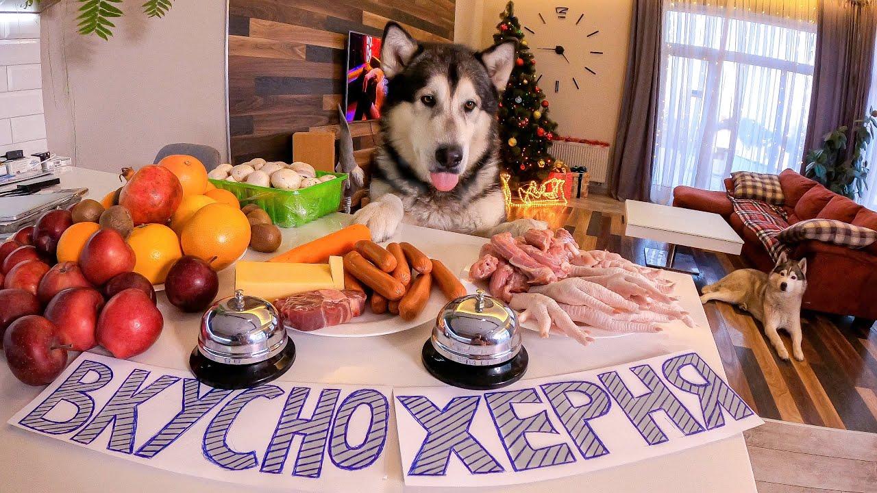УМНАЯ Собака отвечает ВКУСНО или НЕТ на разные блюда! Самые умные хаски и маламуты в мире