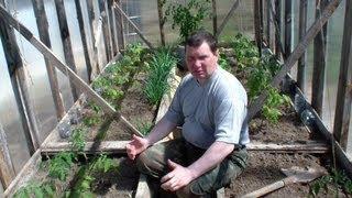 Высаживание вытянутой рассады томатов в теплицу(Про высаживание томатов в парние у меня есть не одно видео, а в этом я хочу рассазать как я высаживаю вытянут..., 2013-05-12T14:18:31.000Z)