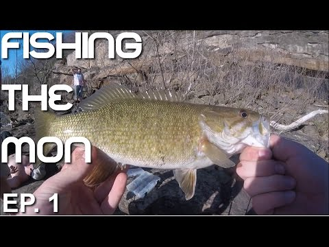 Walleye, Sauger, and Smallmouth Bass | Fishing the Mon Ep. 1