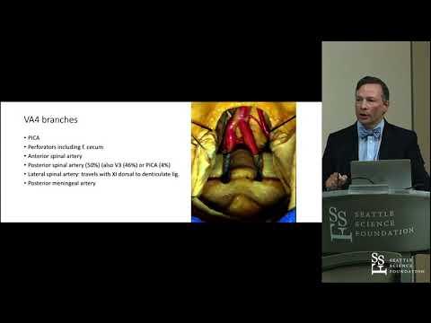 Anatomy of the Posterior Circulation - Shane Tubbs PhD, PA-C