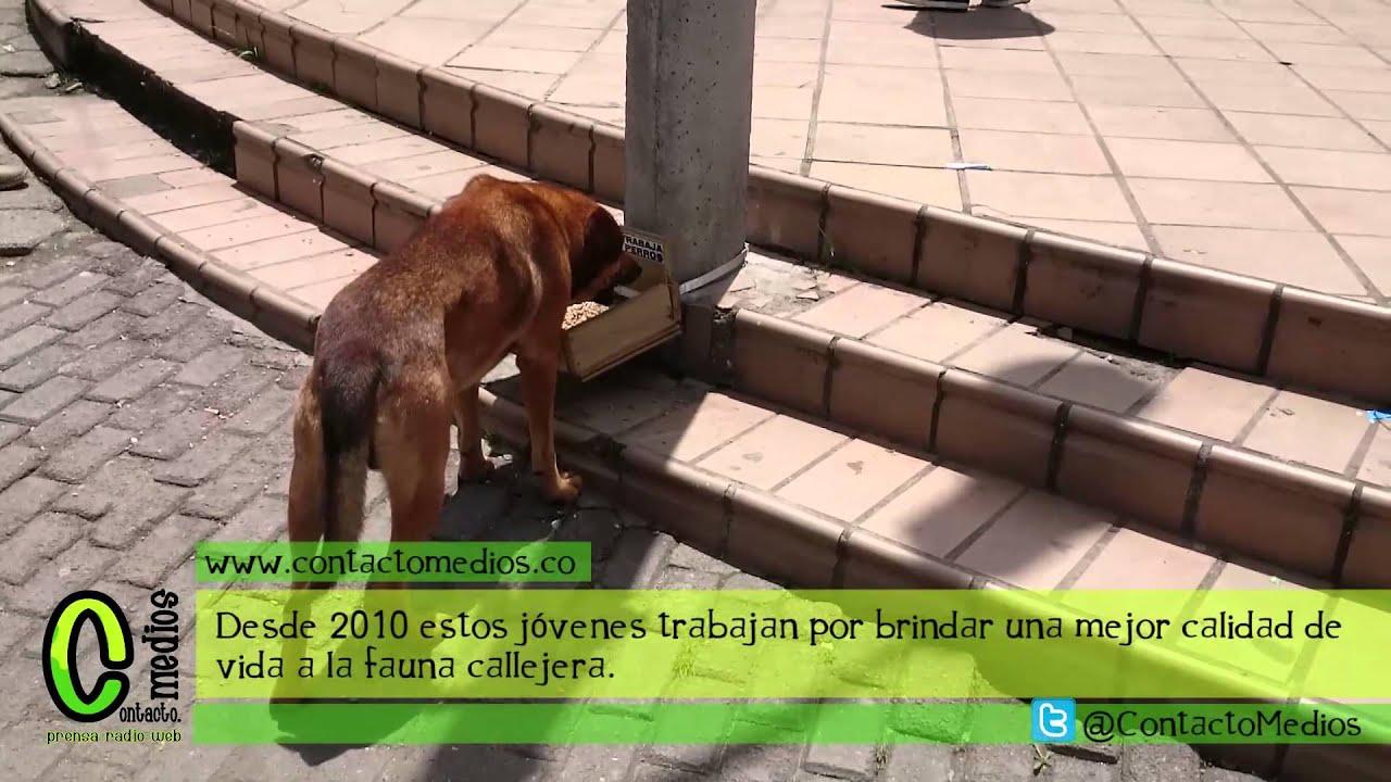Comederos para perros contacto medios youtube for Comederos para perros
