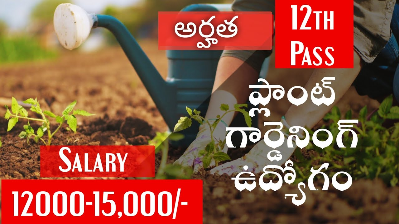 Gardening jobs 2020|Latest private jobs 12th pass Apply form|Vacancies job opening search employment