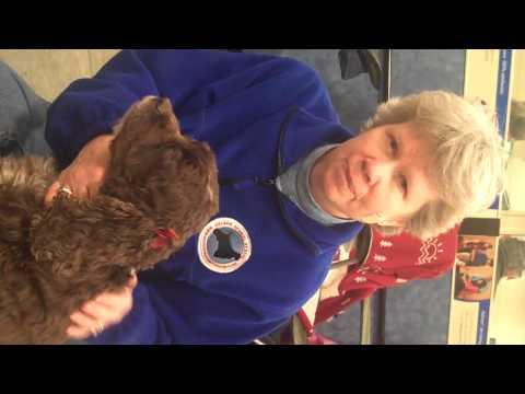 OMB Cocker Spaniel Rescue