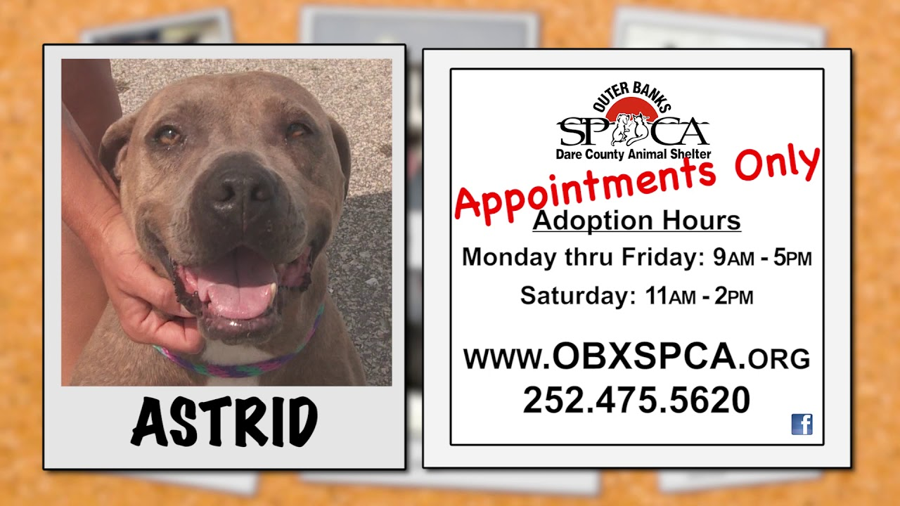 Outer Banks SPCA Pet of the Week - Astrid