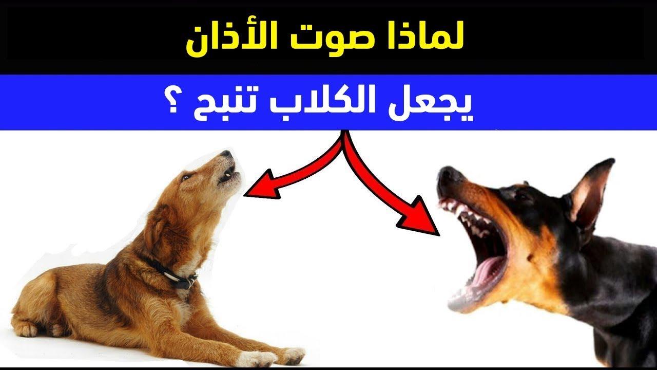 هل تعلم لماذا تنبح الكلاب عند سماع صوت الأذان سبحان الله Youtube