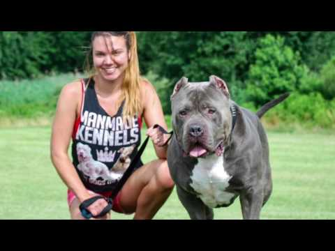 Dark Dynasty Kennels Hulk x ManMade Kennels Cali XL Pitbull Puppies; PITBULL PUPPIES FOR SALE