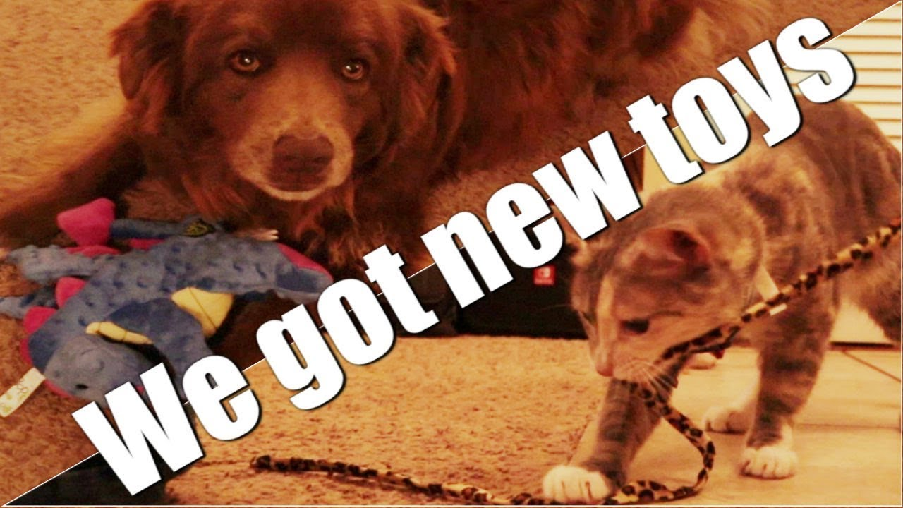 New Cat toy and dog toy - pet toys sent from amazon wishlist