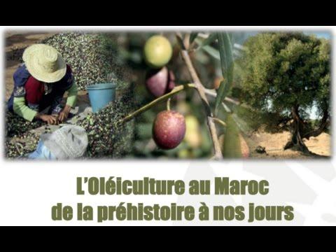 CIHEAM-IAMM Café doc: L'Oléiculture au Maroc (12/2016)