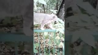 Кот на выданье! Хозяин найдись! Кот умный, кот-собака!