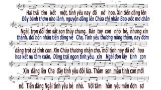 Dâng Đôi Tim Hồng - Đinh Công Huỳnh