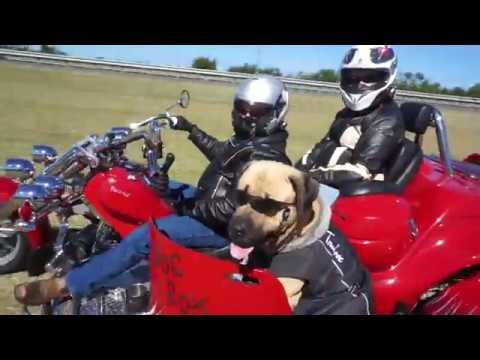 Tex the Trike-Riding Dog
