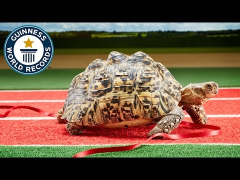 Fastest tortoise - Guinness World Records