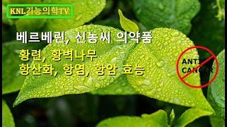 베르베린과 궤양성 대장염 임상 논문 / 대장암 예방, …