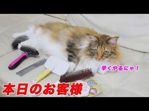 Cats massaged with various brushes