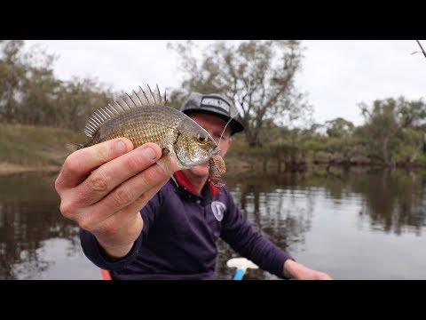 Kayak Bream Fishing In Moore River