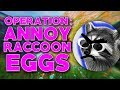 Operation: ANNOY RACCOONEGGS