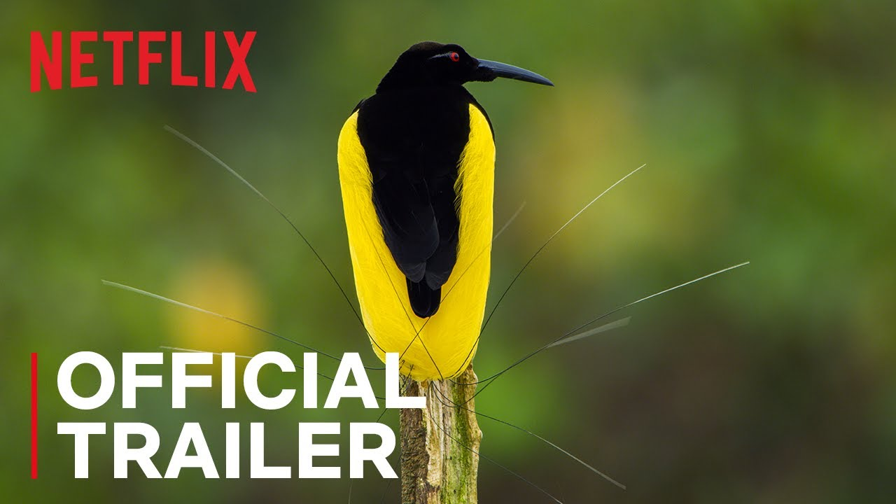 Dancing With The Birds | Official Trailer | Netflix