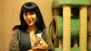 Может ли тайская кошка быть няней? Говорит ЭКСПЕРТ