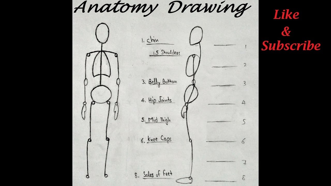 How To Draw Human Body Poses Anatomy Drawing Step By Step Youtube