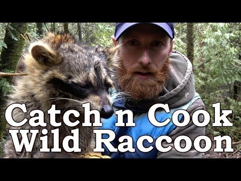 Catch n Cook Clean WILD RACCOON!!! | De-glanding | OPEN FIRE | How To To Trap Raccoon