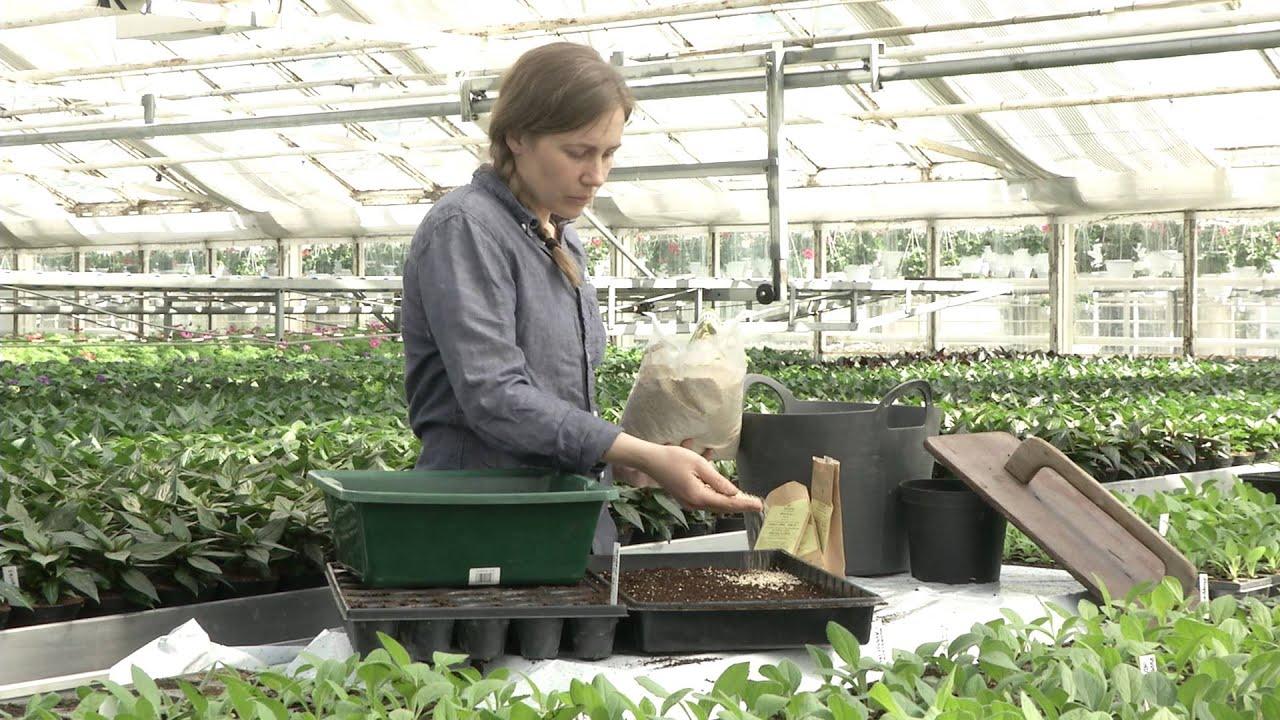 SÃ¥dd och omskolning av plantor