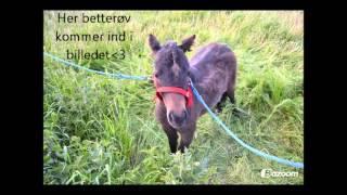 Mistet min hest og pony