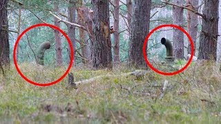 They Stumbled Upon These Pipes In The Woods  Beneath Them They Made A Terrifyingly Awesome Discovery