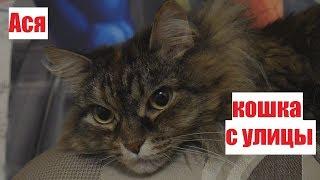 Кошки, принесенные с улицы - лучшие друзья!