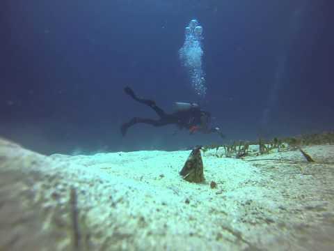 Barracuda Buceo Alona Beach Dive, Panglao, Bohol, Sand Moray Eel