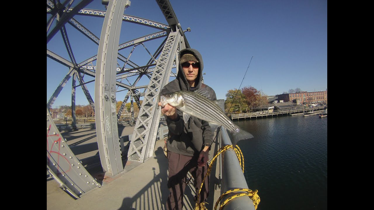 Striped bass fishing the providence river rhode island for Best striper fishing spot in ri