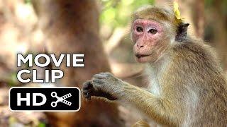Monkey Kingdom Movie CLIP - We