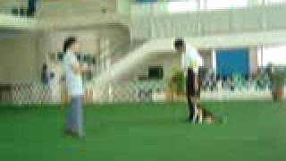 K9 Training Council Dog Show: Obedience Trial Part 3