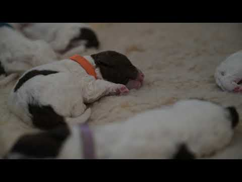 Puppies Activated sleep!
