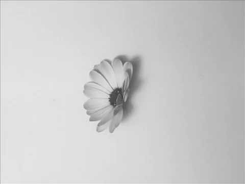 Gif 4 - Flor