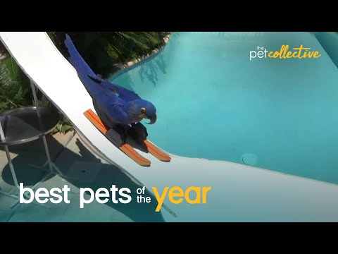 Top 20 Athletic Pets   Best Pets Of The Year 2020