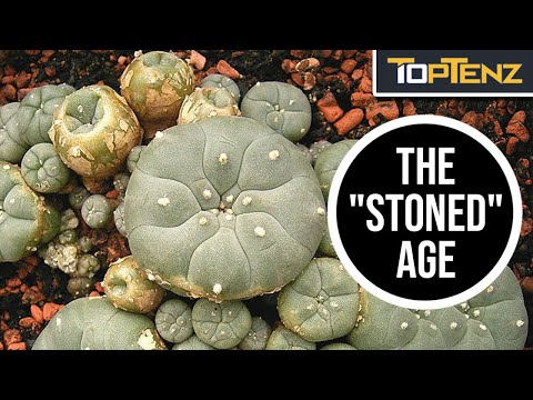 Fascinating Facts About The Stone Age