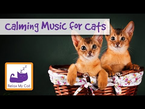 Calming, Soothing Music for Cats