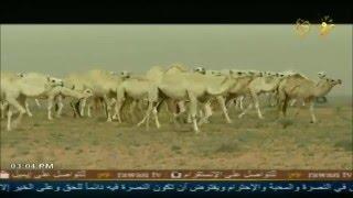 جرة ربابة - مهلي الحشاش