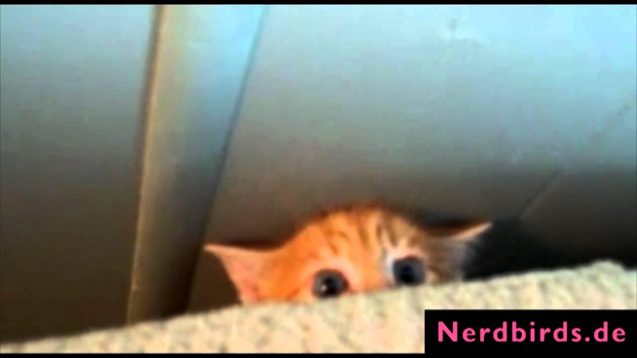 Süße Baby Katzen - Die TOP10 - YouTube