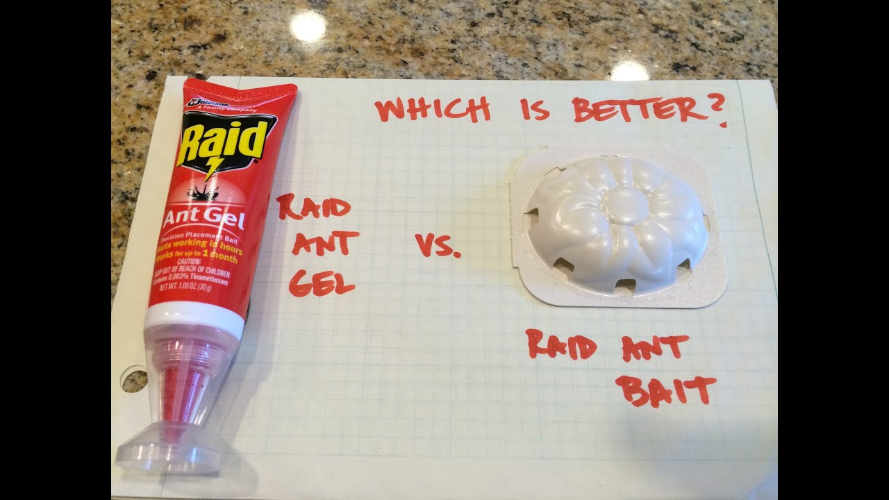 Raid Ant Gel vs Raid Ant Bait, Which is Better? Review - YouTube