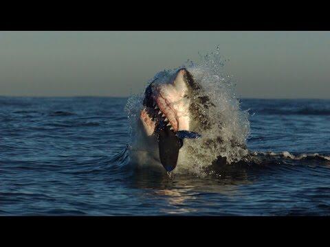 5 Bizarre Shark Hunting Techniques