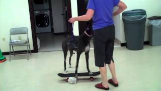 Chapel Hill Dog Training Blue Dog's Skateboarding Dogs
