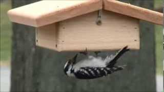 Upside Down Suet Feeder - Nature Prouducts Usa