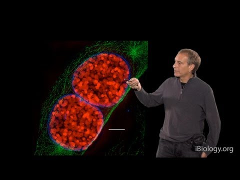 Microscopy: Super-Resolution: Structured Illumination Microscopy (SIM) (David Agard)