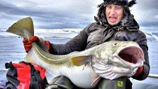 Рыбалка в Баренцевом море - 7. Треска. Ее величество.(Весна 2015 года. Восточный Кильдин. Рекордная треска на 25 килограмм., 2015-04-11T15:51:36.000Z)