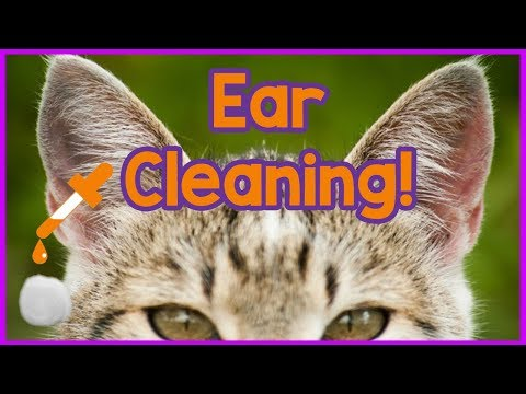 How to Clean Your Cats Ears! Easy 3-Step Tutorial on Cleaning Cats Ears - Products and How to!