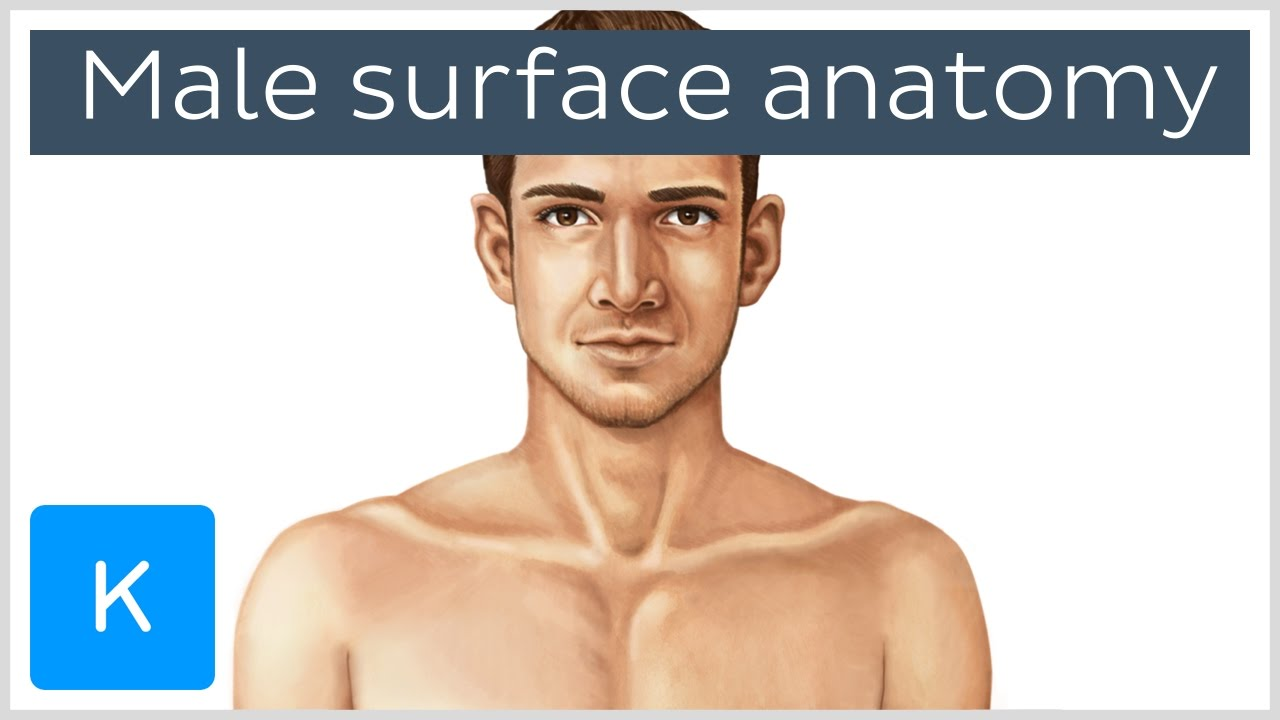 Male surface anatomy (preview) - Human Anatomy | Kenhub - YouTube
